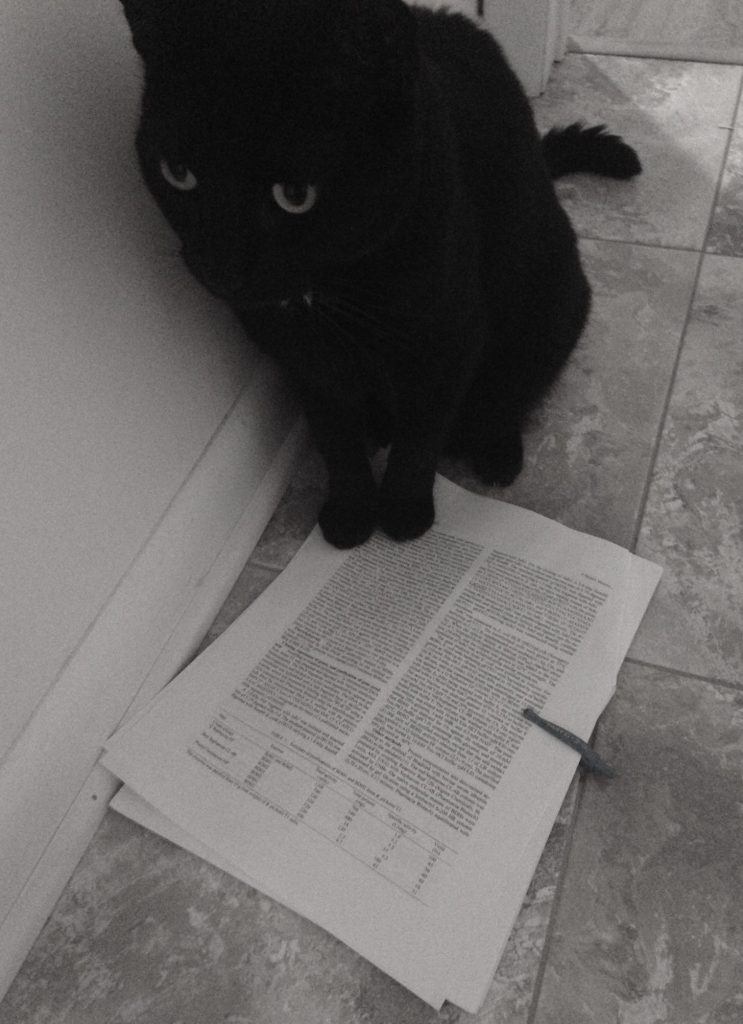 D the cat literature